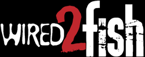 wired2fish_2